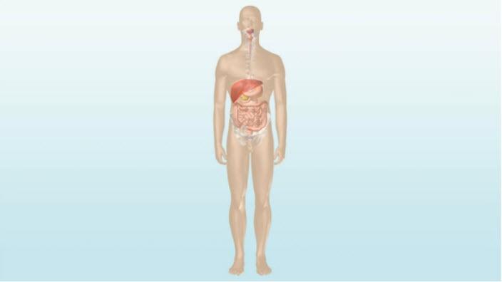 Video zeigt die Funktionsweise des Darms